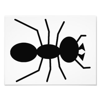 Ant Silhouette Photograph