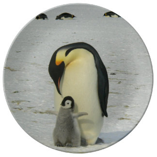 Antarctic Penguins Chick Snow Beach Birds Ocean Plate