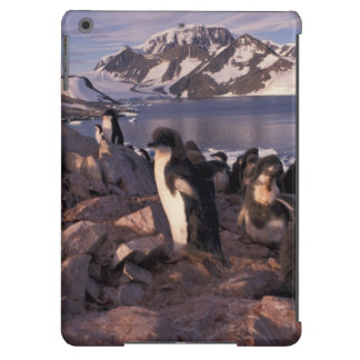Antarctica, Adelie penguin chicks Cover For iPad Air