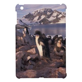 Antarctica, Adelie penguin chicks iPad Mini Case