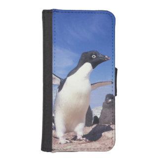 Antarctica, Adelie Penguin Pygoscelis