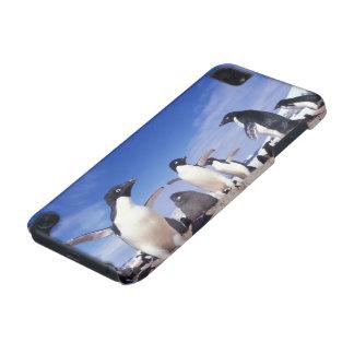 Antarctica, Adelie Penguin Pygoscelis iPod Touch (5th Generation) Cases