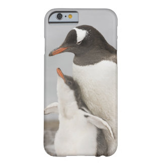 Antarctica, Aitcho Island. Gentoo penguin chick Barely There iPhone 6 Case