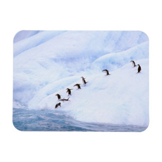 Antarctica, Antarctic Peninsula. Chinstrap Rectangular Photo Magnet