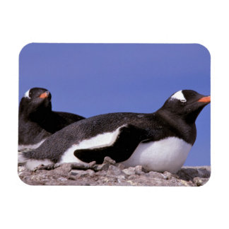 Antarctica, Antarctic Peninsula, Peterman Rectangular Photo Magnet