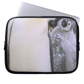 Antarctica, Antarctic Peninsula, Weddell Sea, 2 Laptop Sleeve
