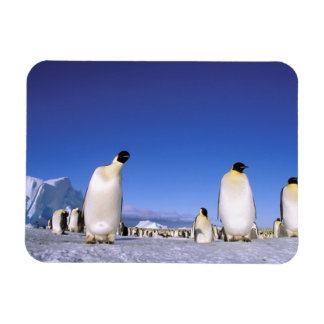 Antarctica, Antarctic Peninsula, Weddell Sea, 3 Rectangular Photo Magnet