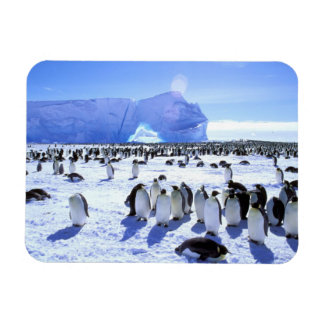 Antarctica, Antarctic Peninsula, Weddell Sea, 5 Rectangular Photo Magnet
