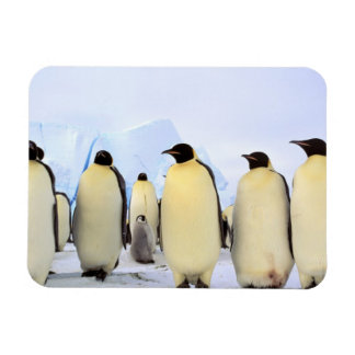 Antarctica, Antarctic Peninsula, Weddell Sea, Rectangular Photo Magnet