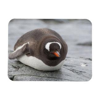 Antarctica, Antarctic Penninsula. Petermann Rectangular Photo Magnet