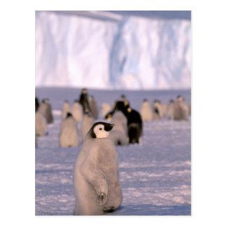 Antarctica, Australian Antarctic Territory, 3 Postcard