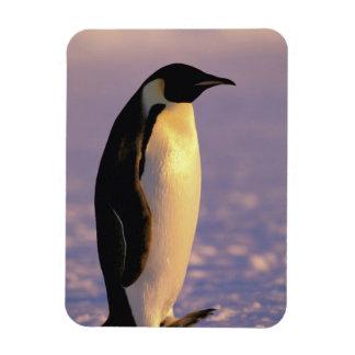 Antarctica, Australian Antarctic Territory, 4 Rectangular Photo Magnet