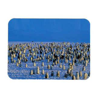 Antarctica, Australian Antarctic Territory, 5 Rectangular Photo Magnet