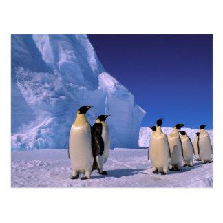 Antarctica, Australian Antarctic Territory, 7 Postcard