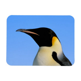 Antarctica, Australian Antarctic Territory, 8 Rectangular Photo Magnet