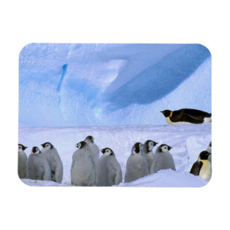 Antarctica, Australian Antarctic Territory, Cape Rectangular Photo Magnet