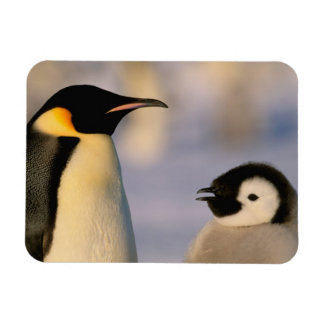 Antarctica, Australian Antarctic Territory, Rectangular Photo Magnet