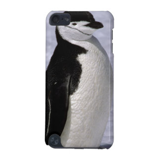 Antarctica. Chinstrap penguin 2 iPod Touch (5th Generation) Cover