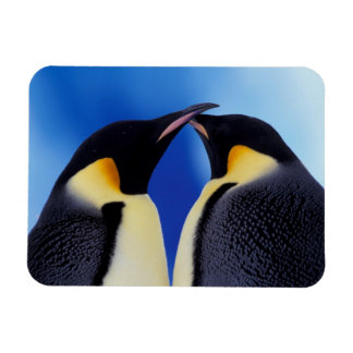 Antarctica, Emperor Penguin (Aptenodytes 2 Rectangular Photo Magnet