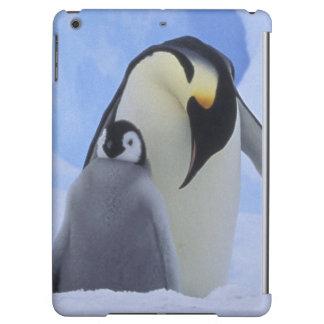 Antarctica. Emperor penguins and chick