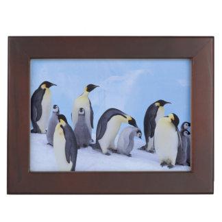 Antarctica, Emporer Penguin ((Aptenodytes Keepsake Box