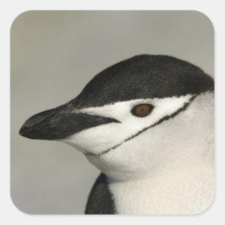 Antarctica, Half Moon Island. Close-up of adult Square Sticker