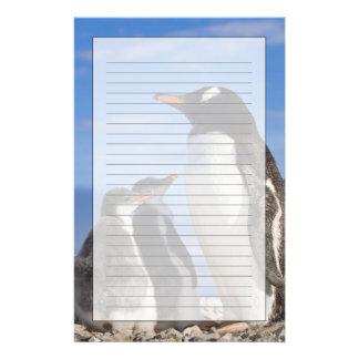 Antarctica, Neko Cove (Harbour). Gentoo penguin 2 Stationery