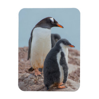 Antarctica. Neko Harbor. Gentoo Penguin 3 Rectangular Photo Magnet