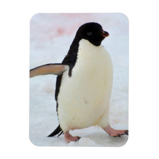Antarctica. Petermann Island. Adelie penguin Rectangular Photo Magnet