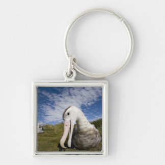 Antarctica, South Georgia Island UK), Curious Silver-Colored Square Key Ring