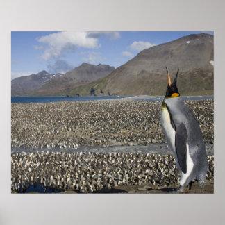 Antarctica South Georgia Island UK King 8 Posters
