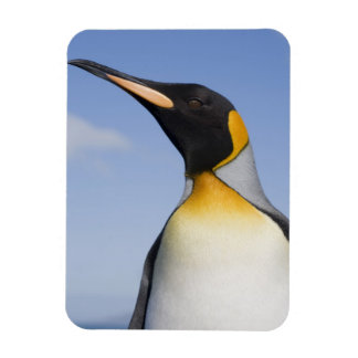 Antarctica, South Georgia Island (UK), Portrait Rectangular Photo Magnet