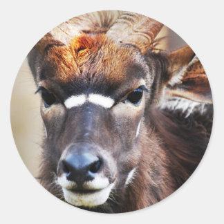Antelope close up round sticker