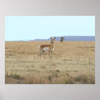 Antelope Horizon Poster