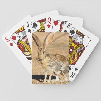 Antelope jackrabbit portrait, Arizona Playing Cards