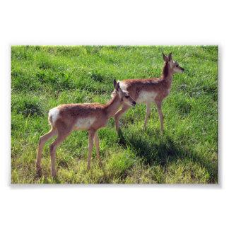 Antelope Orphans Photo Art