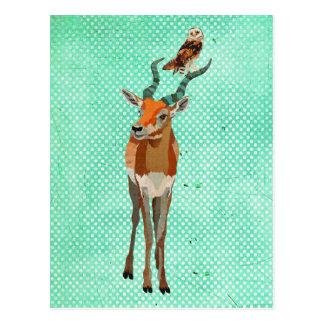 ANTELOPE & OWL Postcard