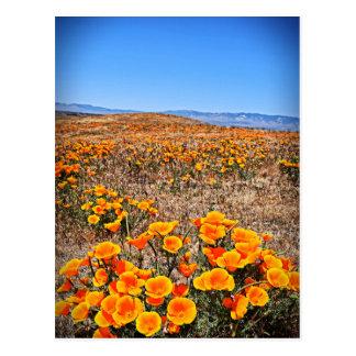 Antelope Valley California Poppy Reserve Postcard