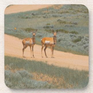 Antelopes crossing coaster