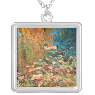 Anthias fish and black coral, Wetar Island, Square Pendant Necklace