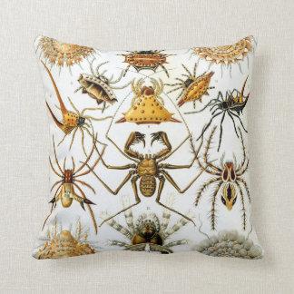 Anthropology Comfort Cushion