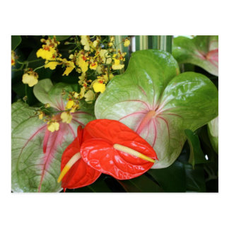 Anthurium Beauties! Postcard