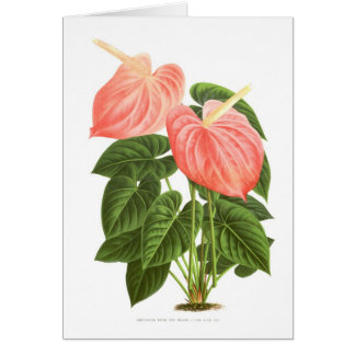 Anthurium Card