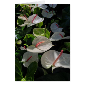 Anthuriums Card