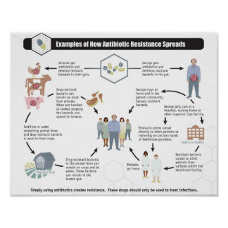 Antibiotic Resistance Health Wellness poster