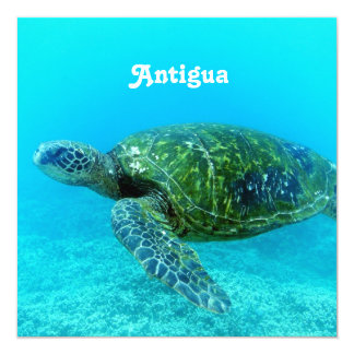 Antigua Hawk Billed Turtle Announcements