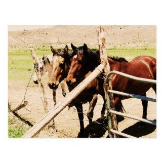 Antimony Horses Postcard