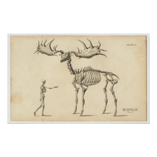 Antique Anatomical Walking Skeleton Man + Elk Poster