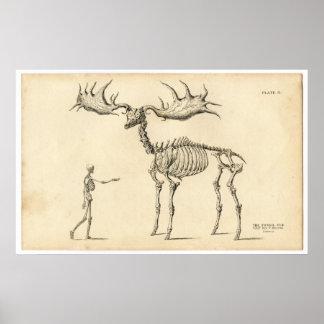 Antique Anatomical Walking Skeleton Man + Elk Print