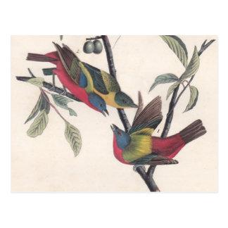 Antique Audubon Painted Bunting Postcard